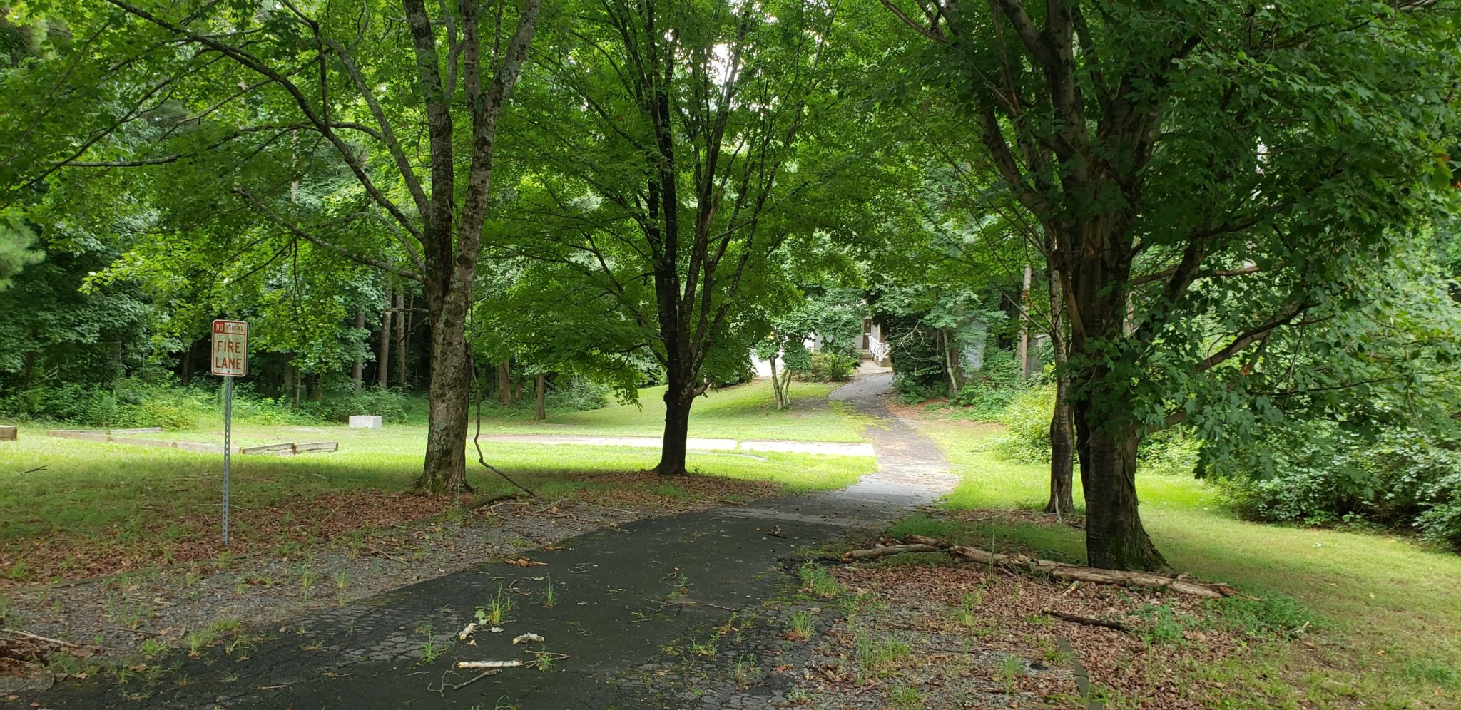 driveway with trees